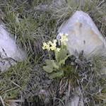 La flora della Valle Argentina