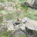 La fauna dell'entroterra ligure