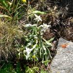 La flora dell'entroterra ligure